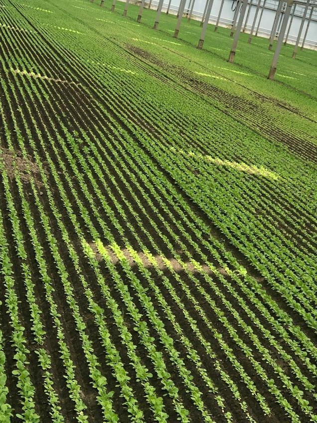 Slechte plekken aanpakken met PHC AgroAcid