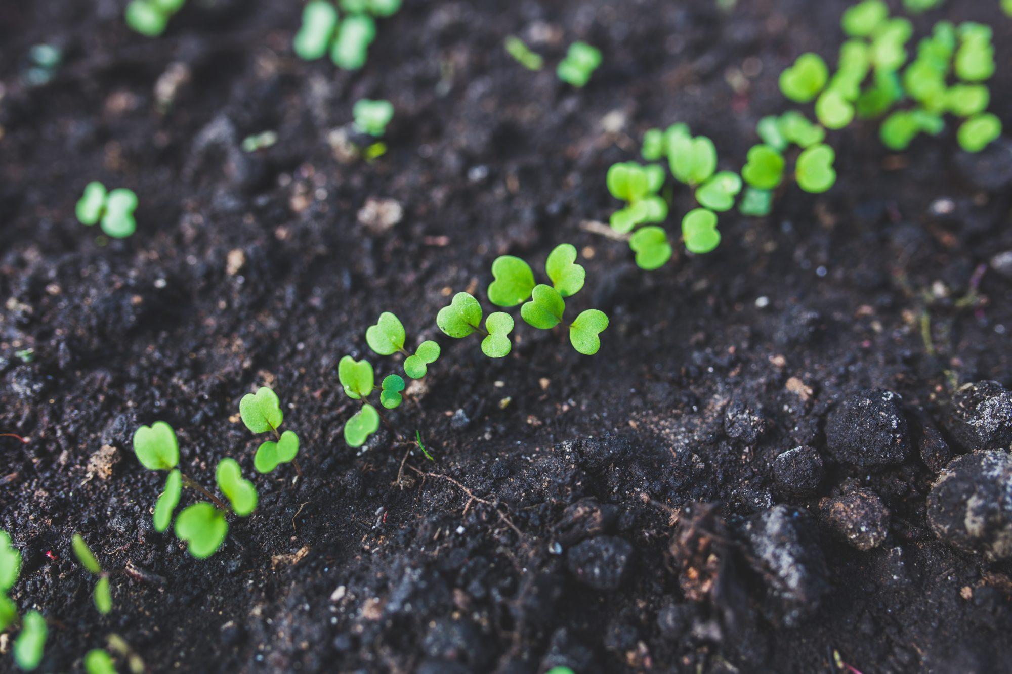 Starten met organische meststoffen