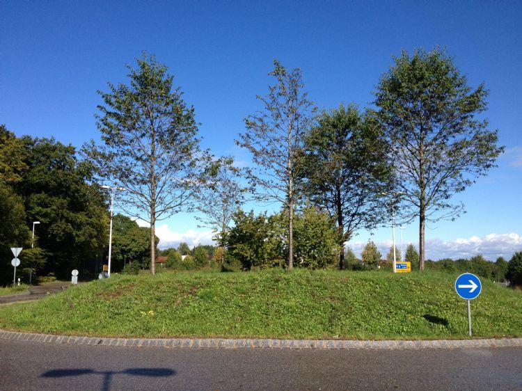 Boomzorg: Mycorrhiza's inzetten bij verplanten van bomen