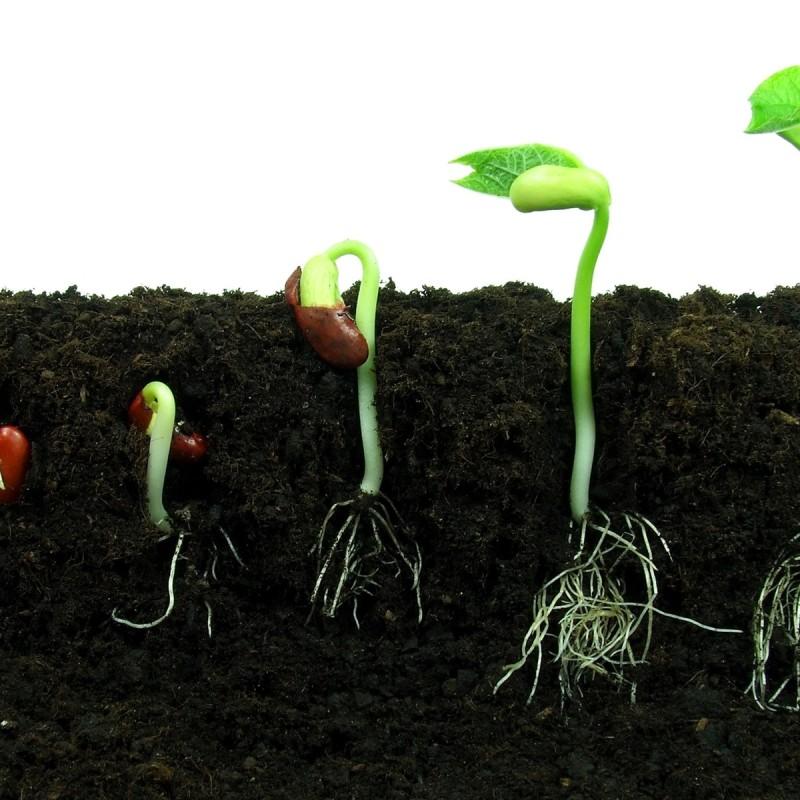 What About Soil? Webinar HAS Hogeschool