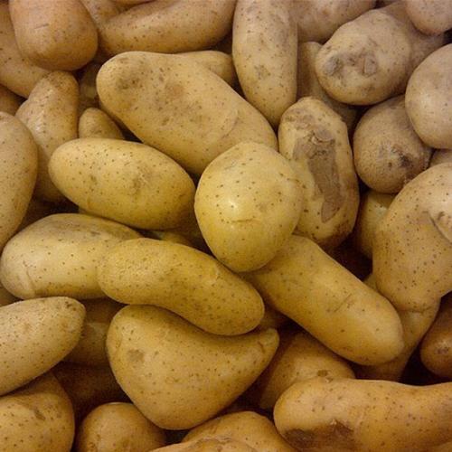 Webinar: Nut van plantaardige aminozuren op aardappels gedurende stressperiodes