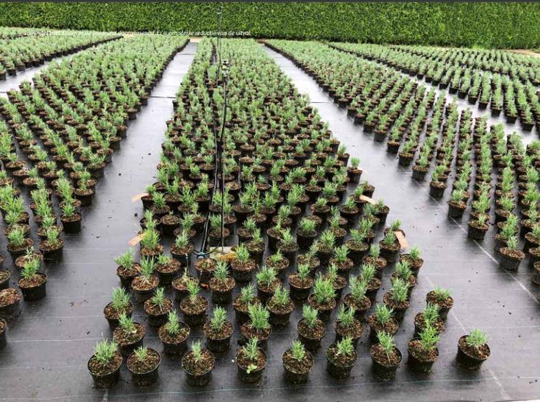 Grotere plantweerbaarheid met biologische toevoegingen aan substraat
