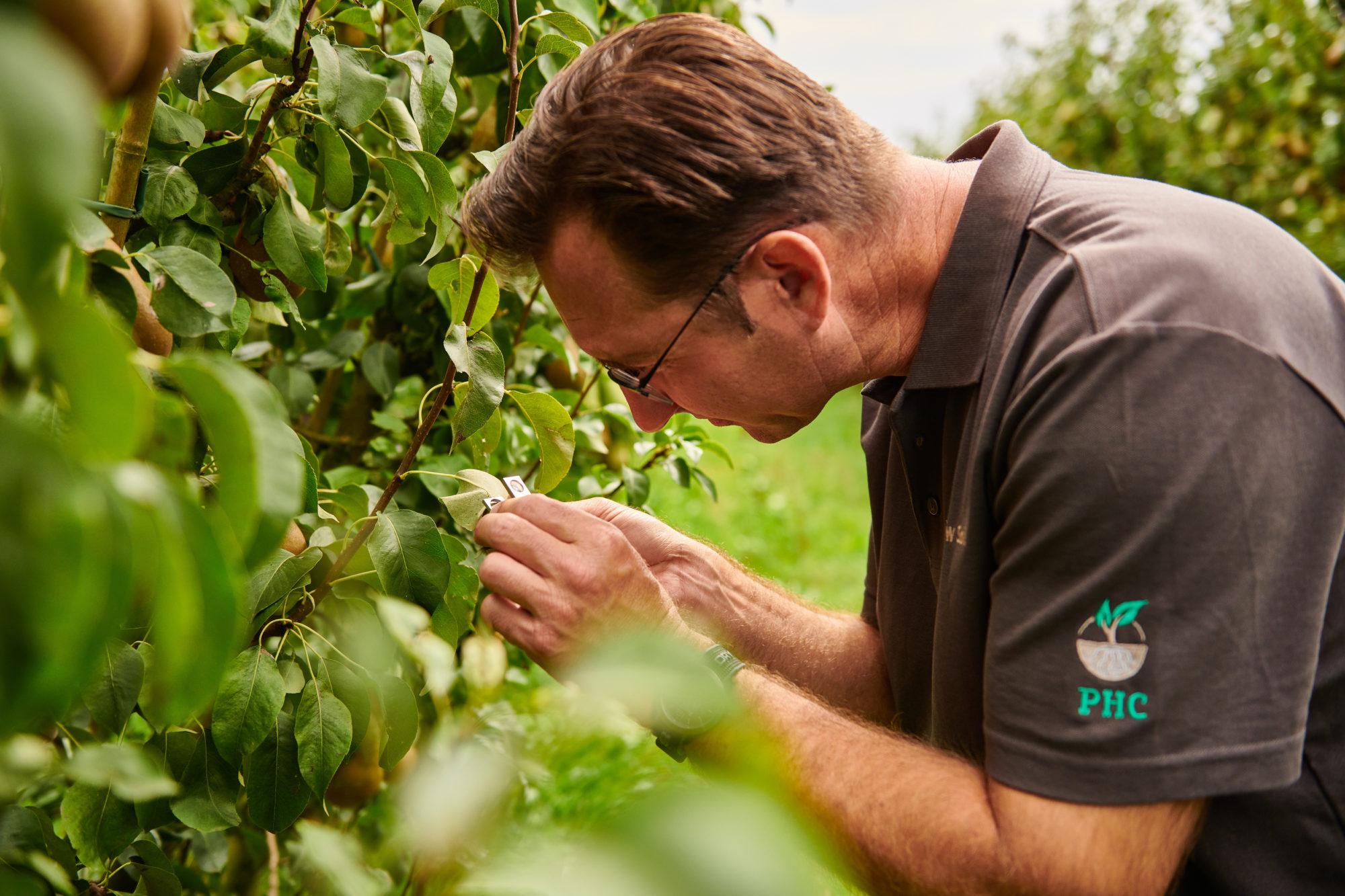 Teeltadviseur Boomkwekerij en vaste planten