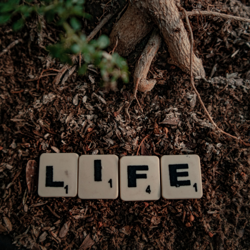 Investeren in bodemleven en organische bemesting: sneller resultaat dan gedacht