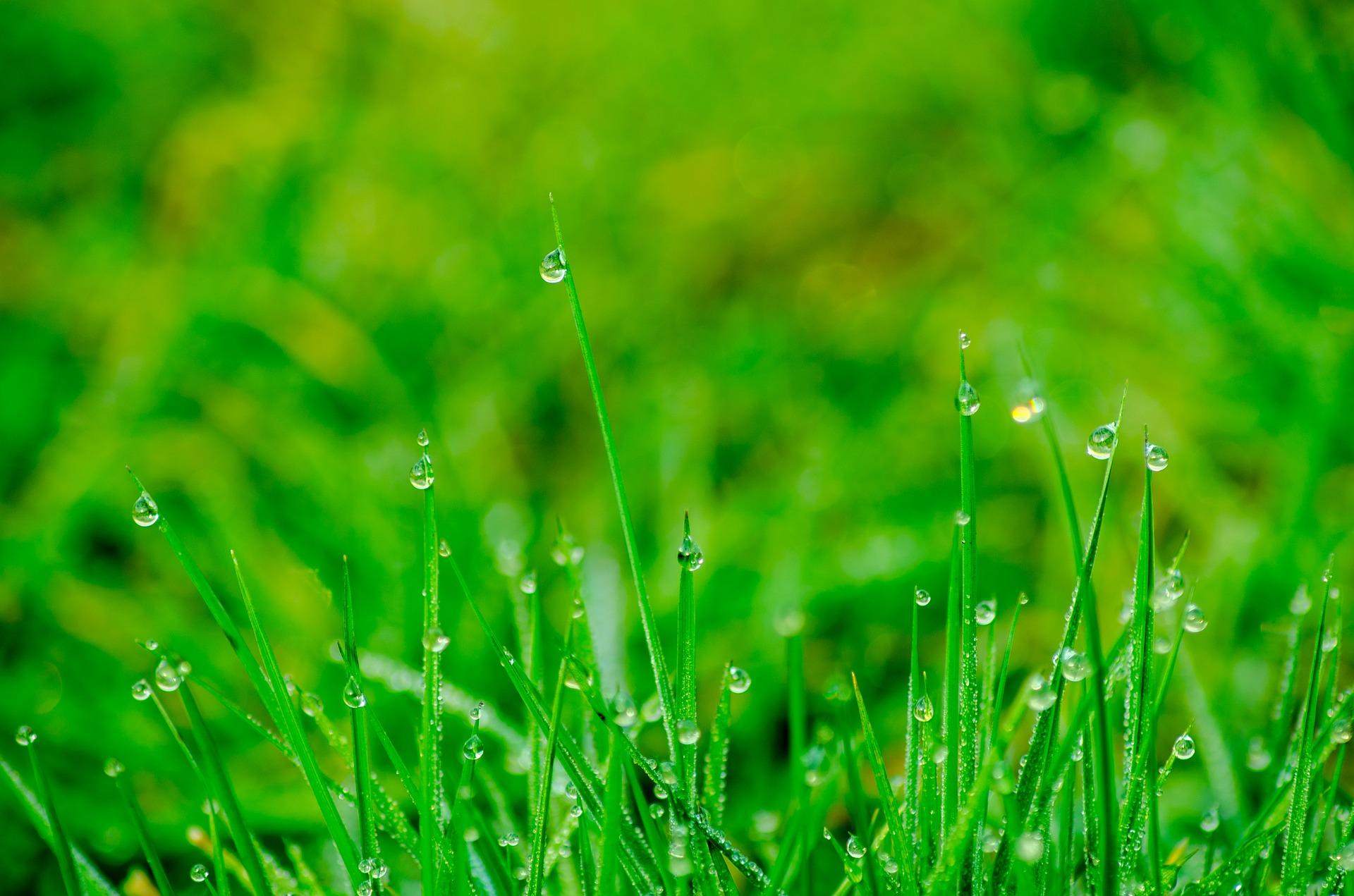 Klantreview – Verbeteren waterbergend vermogen en droogtetolerantie van percelen